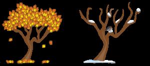 秋・冬の木々:オンライン東洋医学講座|望永航史