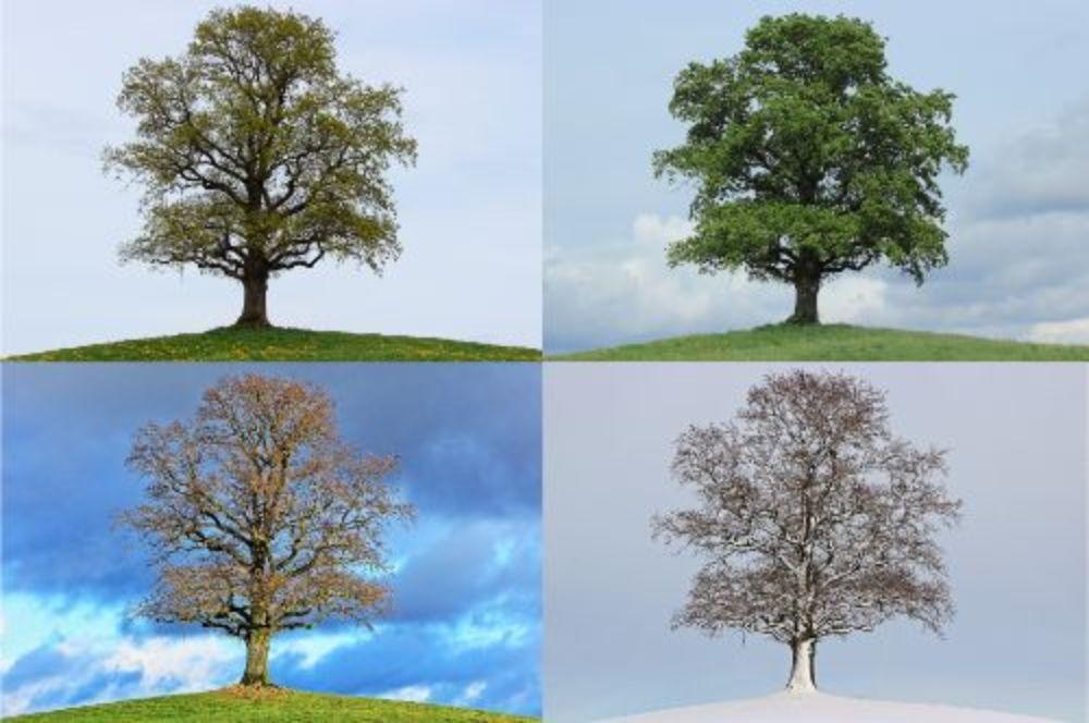 tree-776932_1920 (1)