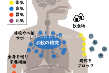 東洋医学の「気」とは【全30回】望永航史のオンライン東洋医学講座